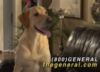 Talking Dog Endorses The General®